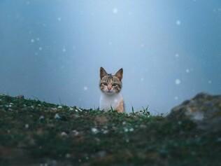 10 refugis per a gats