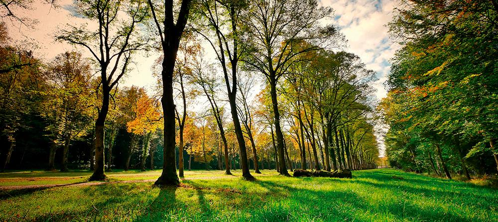 Parc més verd