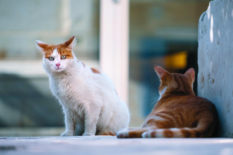 Registre, esterilització i control de la salut dels gats de carrer